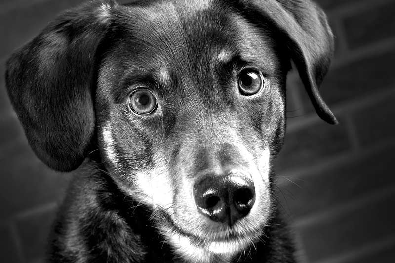 Hunde_20141211-Content