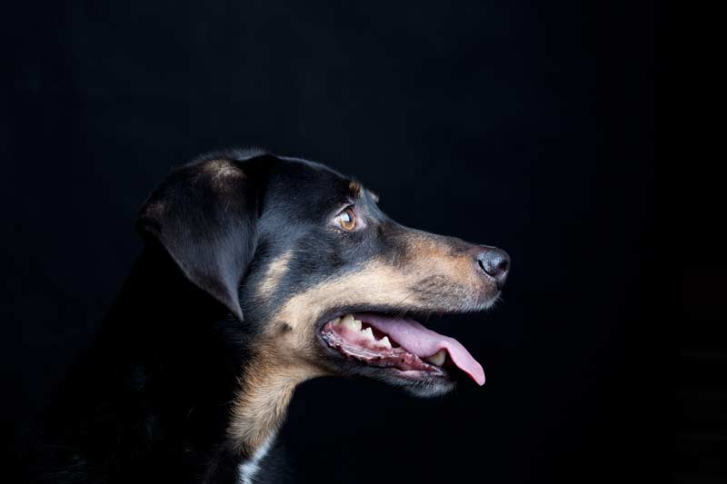 Hunde_20141211-Foto