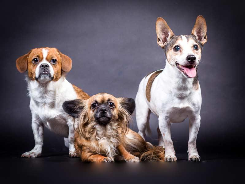 Drei-Hunde